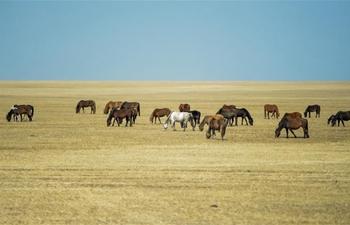 Spring scenery of Hulun Buir Grasslands in Inner Mongolia