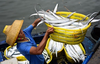 Fishing industry resumes operation in Hainan