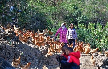 Pic story: rural economy boosts family income in Guangxi