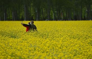 In pics: cole flower fields in Beijing