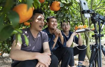 Livestream platforms used to promote sale of tangerine in Chengdu