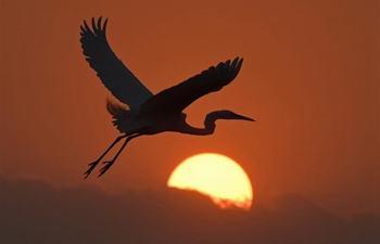 Egret flies over forest park at sunset in Nanchang, E China