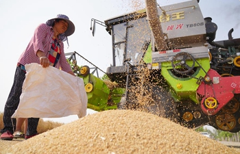 Farmers harvest wheat in Shahe, Hebei