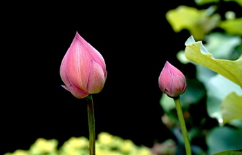 Flower show kicks off at Shanghai Botanical Garden