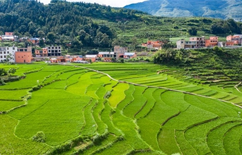 Scenery of terraced fields in Guizhou