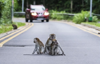 In pics: long-tailed macaques in Singapore's Central Catchment Nature Reserve