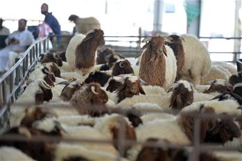 People visit livestock market ahead of Eid al-Adha festival in Kuwait