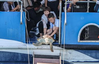 Sea turtles released back to sea in Hainan