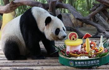 In pics: giant pandas at Chimelong Safari Park in Guangzhou