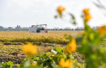 Paddy fields in Jilin enter harvest season