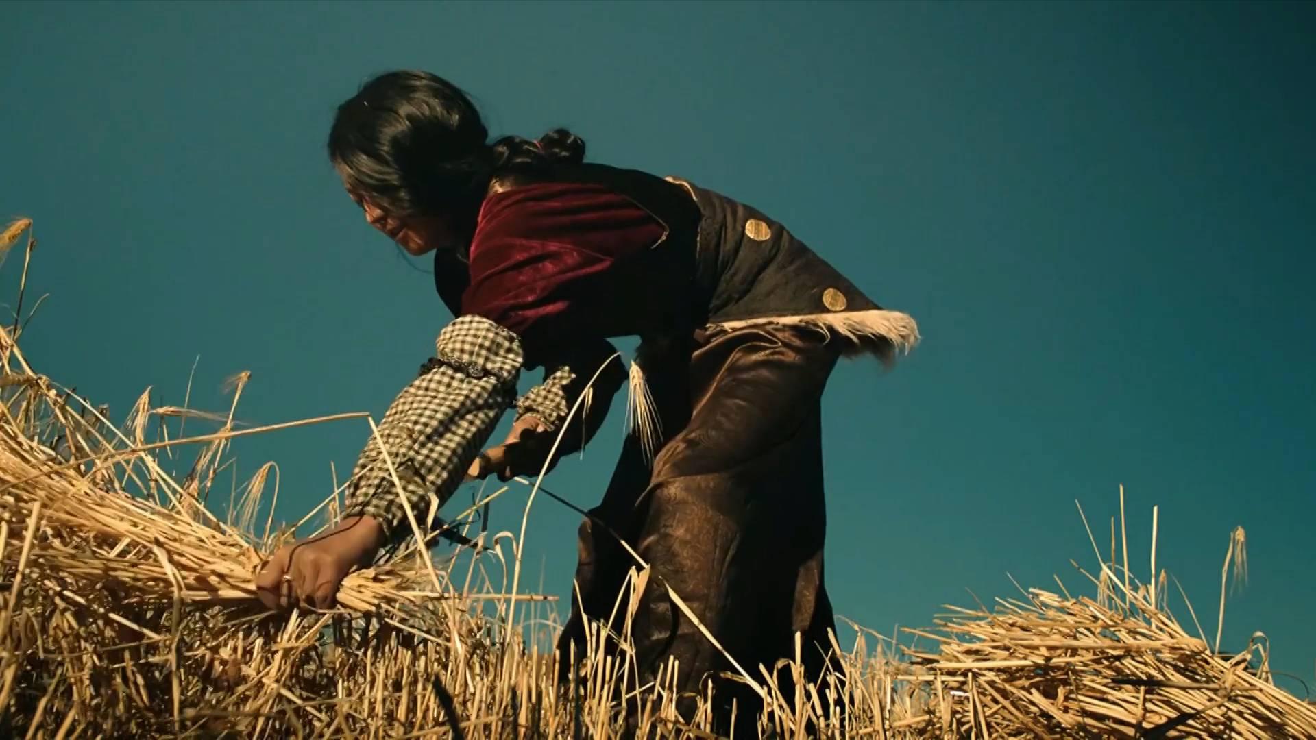 70 years on, China's Garze Tibetan prefecture sees huge development