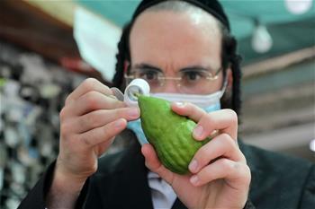 Ultra-orthodox Jewish men inspect Etrog in central Israeli city of Bnei Brak