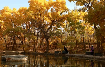 Scenery of populus euphratica forest in Gansu
