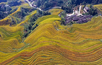 Aerial view of Longji terraced fields in Longsheng County, Guangxi