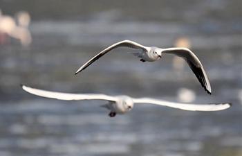 In pics: birds in Kuwait City