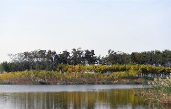 View of wetland park in Tianjin
