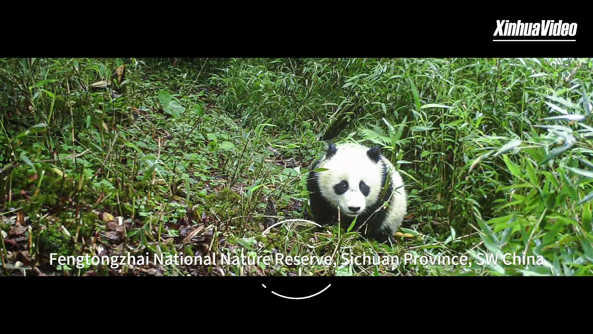 Mother panda and cub captured on cam in SW China