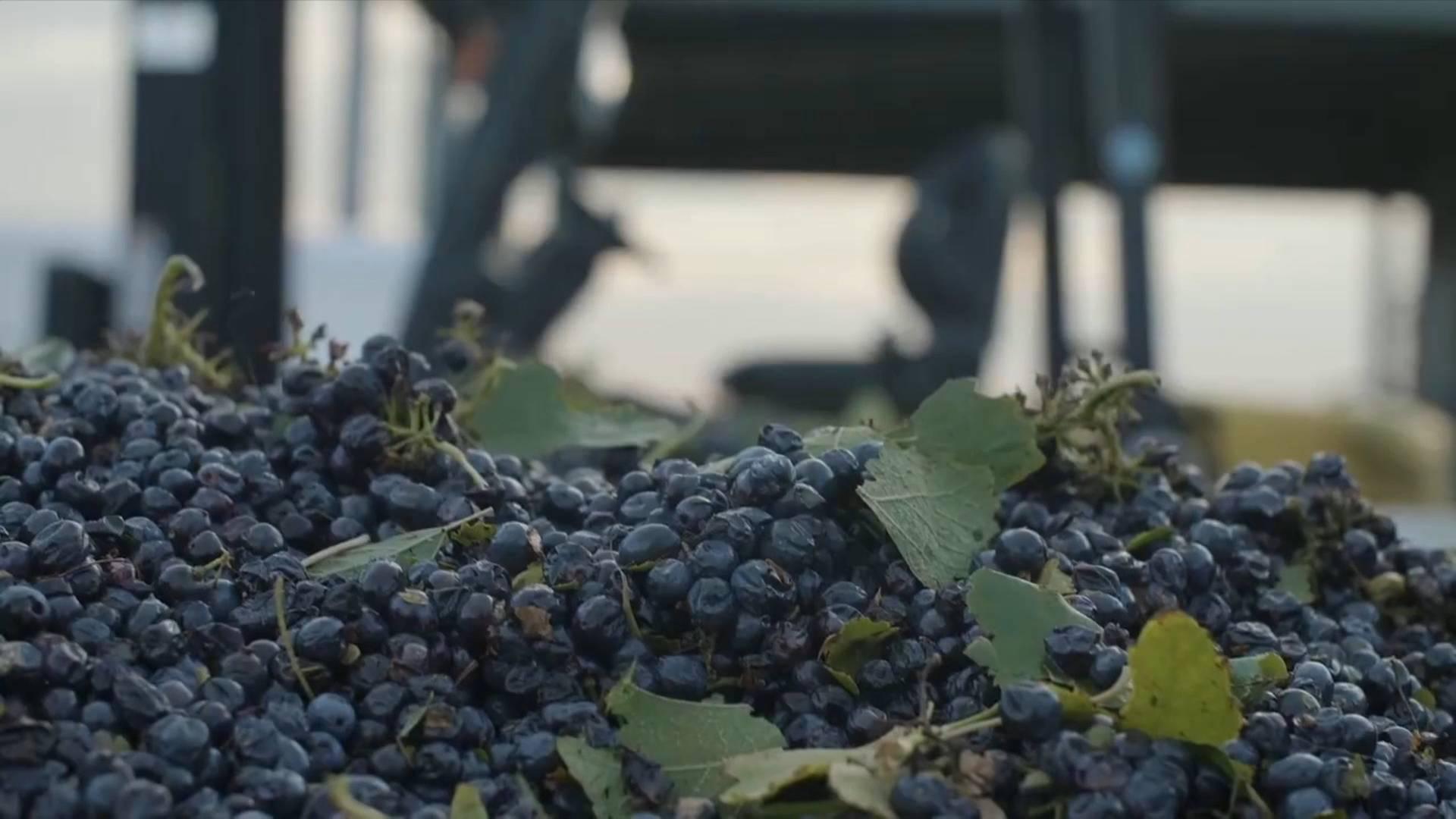 Australian wine-maker eyes Chinese market | Vlog on China import expo