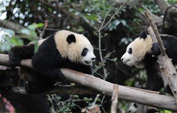 International Panda Day marked in Chengdu