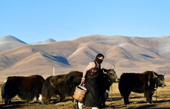 Ecological animal husbandry at Jiatang Grassland in Qinghai