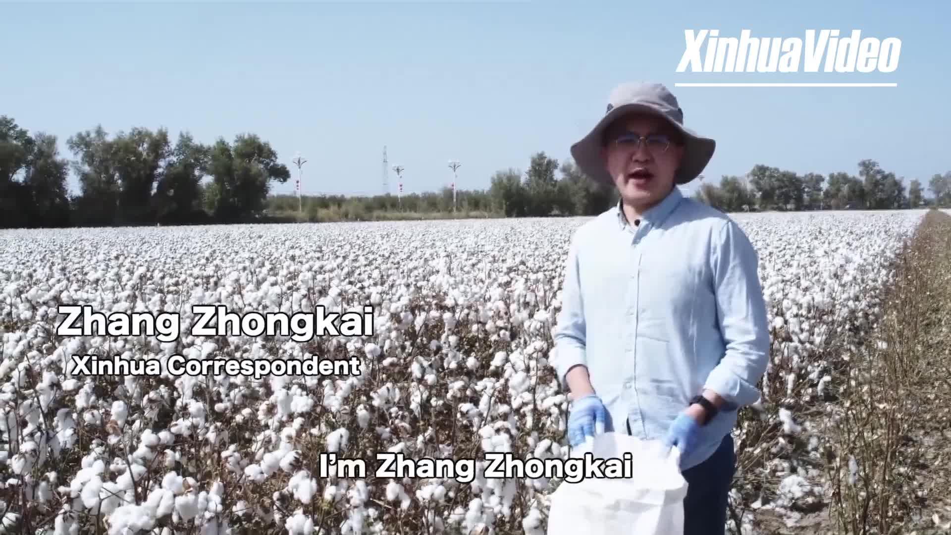 The rise of modern farming in Xinjiang's cotton fields