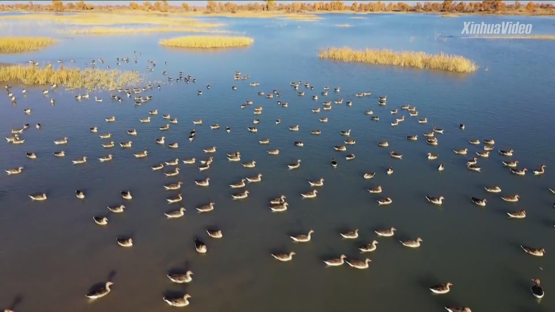 Breathtaking winter sunset in Xinjiang wetland park
