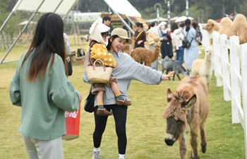 """""""Go Farm"""" in Gucheng Village attracts many tourists"""