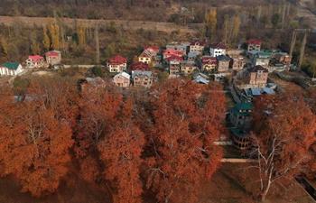 Autumn scenery in Srinagar city