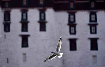 In pics: birds at Longwangtan Park in Lhasa