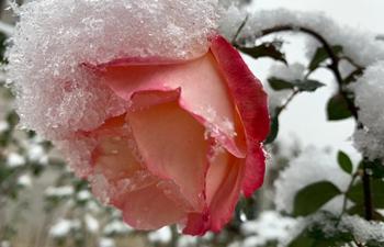 Snowfall hits Beijing