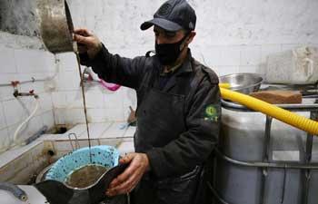 Olive oil workshop in northeastern Algeria