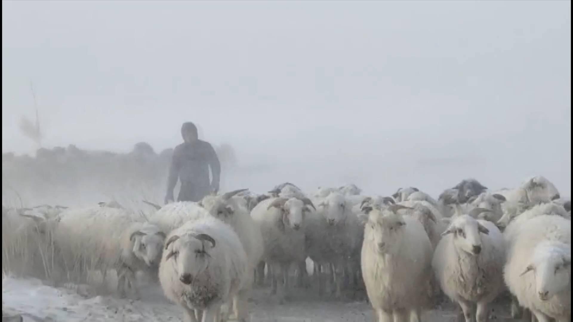 Blizzard hits north China's Inner Mongolia