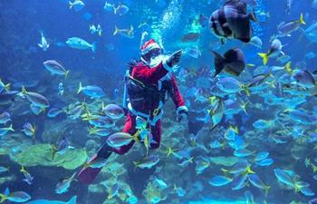 Scuba divers dressed as Santa Claus during performance at Aquaria KLCC aquarium in Malaysia