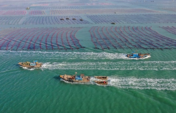 People work on marine ranch in Rongcheng, Shandong