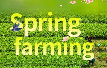 """Chunfen"": Spring Equinox"