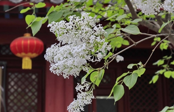 In pics: blooming flowers at temples in Beijing