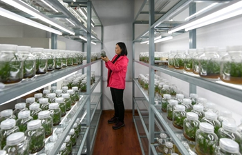 Researchers dedicated to protection of holcoglossum omeiense in Sichuan