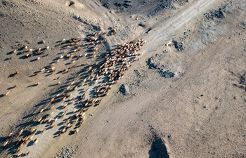 Herdsmen busy with transferring livestock to spring pastures in Xinjiang