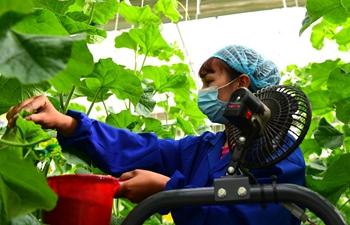 People work in modern vegetable industrial park in Kashgar, Xinjiang