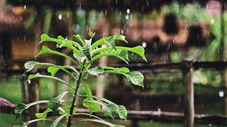 二十四節氣之谷雨原創音樂《谷雨的旋律》發布