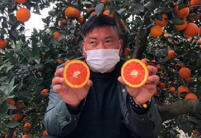 【科技戰疫】為湖北農民加油!首批秭歸臍橙已上架淘寶
