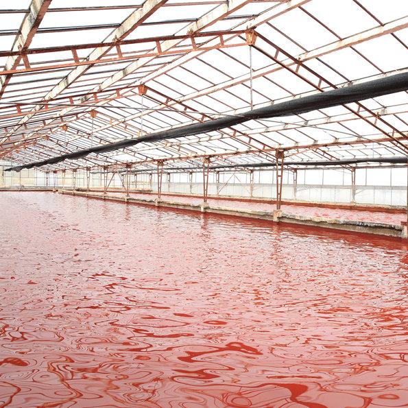 专家纵论雨生红球藻产业发展