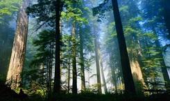江西舉辦首屆森林旅遊節