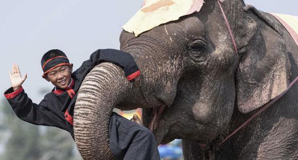 老撾舉辦大象節
