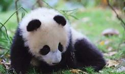 青藏高原野生動物園復工見聞
