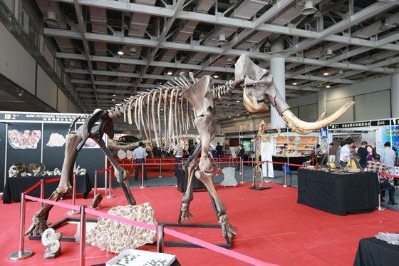 中國(長沙)國際礦物寶石博覽會化石高峰論壇開幕