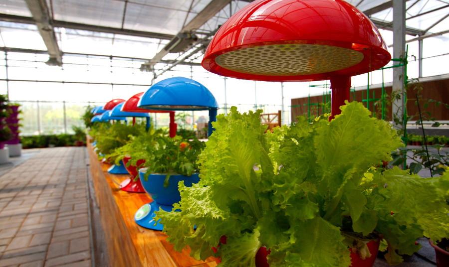 第六届兰陵(苍山)蔬菜产业博览会招商招展工作成果丰硕
