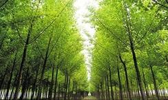 國家林業局:五大國家級林業重點展會將陸續舉辦