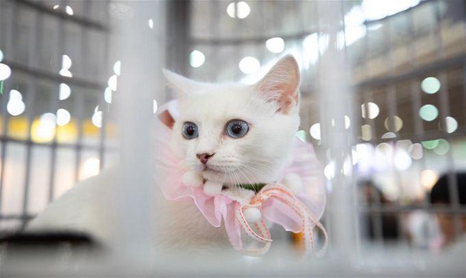 寵物展受熱捧 寵物經濟造商機