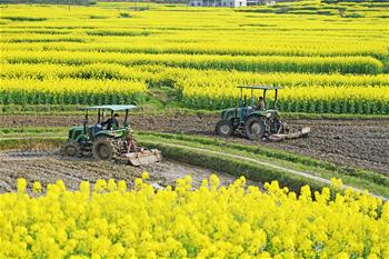 春分將至農事忙